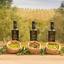 Prêmios Verde Louro: Saiba por que somos um dos melhores azeites do mundo
