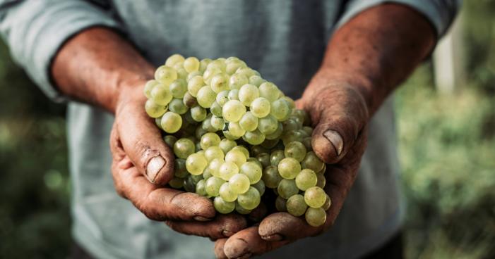 Conheça os 6 principais benefícios da uva para a sua saúde