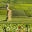 6 motivos para conhecer a região de Champagne na França