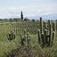 5 vinhos argentinos de Cafayate que você precisa conhecer