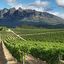 Vinhos da África do Sul: tudo o que você precisa saber