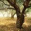 Conheça a origem do azeite segundo a mitologia grega