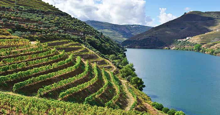 Conheça as principais regiões vinícolas de Portugal
