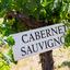 Tudo o que você precisa saber sobre a uva Cabernet Sauvignon