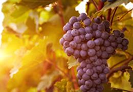 Vinhos do Novo e do Velho Mundo: história, tradição e curiosidades