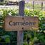 Carménère day: o que você precisa saber sobre essa uva