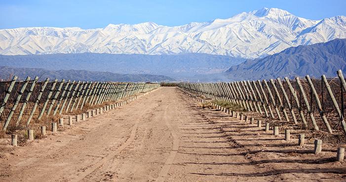 Vinhos argentinos: conheça a história de Mendoza