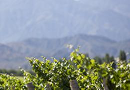 Saiba tudo sobre os vinhos argentinos