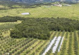 A qualidade do azeite extra virgem e os parâmetros que a caracterizam