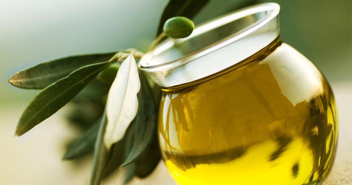 Descubra os principais benefícios da folha de oliveira para sua saúde