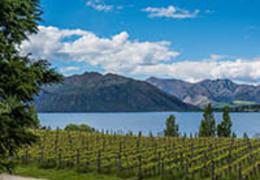 Conheça os 4 principais vinhos da Nova Zelândia