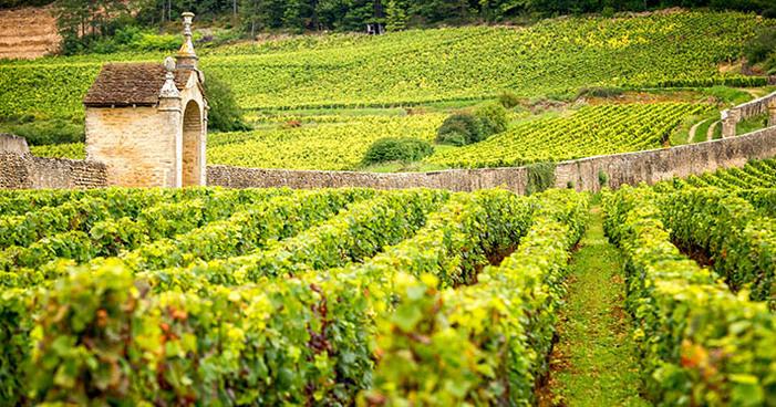 Borgonha: conheça a história da rota dos vinhos franceses