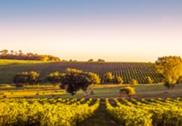 Por que o vinho da região de Bordeaux é tão especial?