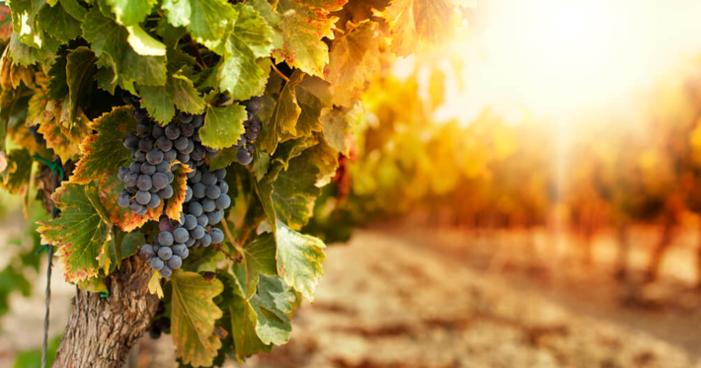 Turismo: a experiência da hospedagem em vinícolas