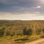 História da olivicultura no Brasil